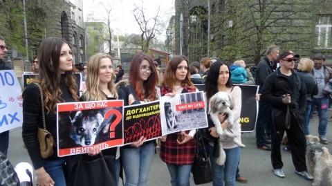 Зоозащитники Киева протестуют против жестких убийств животных. Власть молчит
