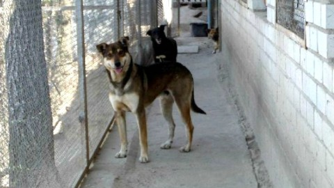 """Шанс на жизнь.Общество защиты животных """"S.O.S"""" приютило собак и кошек из зоны АТО"""