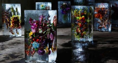 An exhibition of flowers frozen in the ice will take place in Kyiv