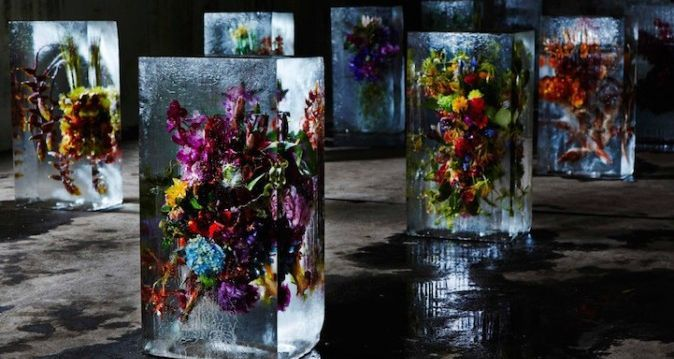 exhibition of flowers frozen in the ice in kyiv