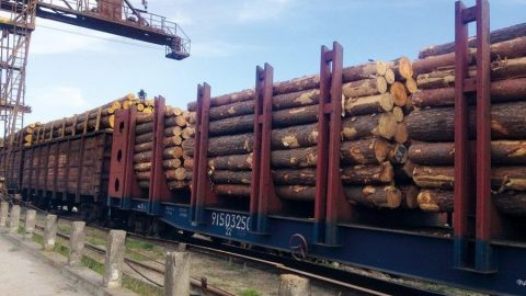 Ukraine wood exports to EU countries has grown