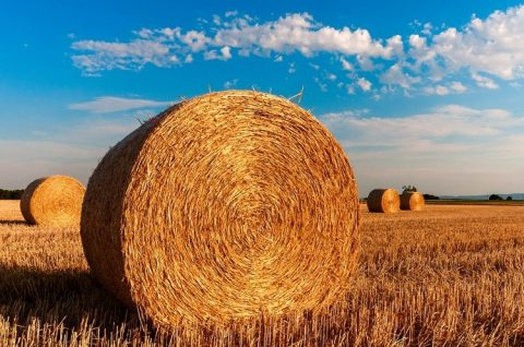 Ukraine is among the TOP-3 exporters of agricultural products to the European Union