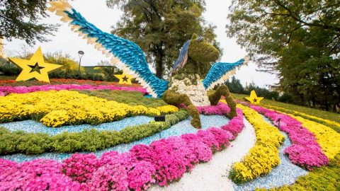 Independence Day Flower Exhibition