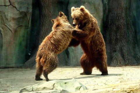 Golden autumn favor visiting Kyiv Zoo