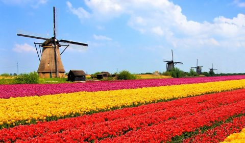 The Netherlands opens its borders to Ukrainians